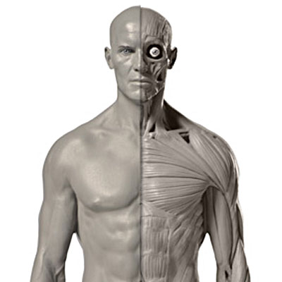 anatomytoolsfeaturedimage