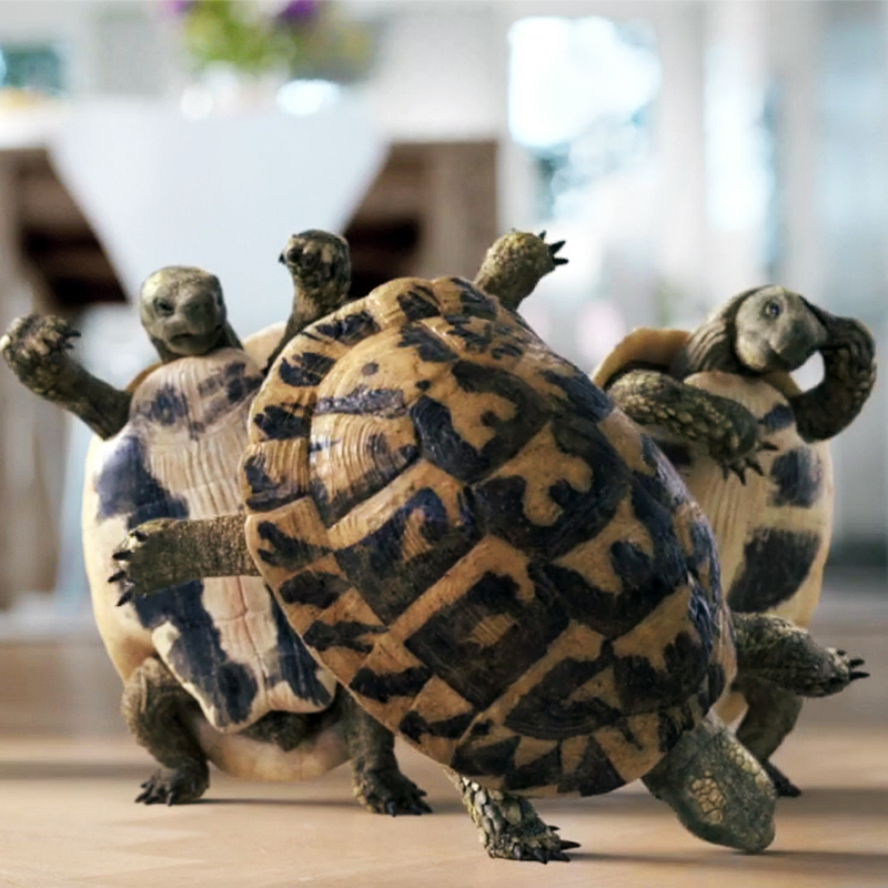 Turtles Can Now Dance, Thanks to ZBrush