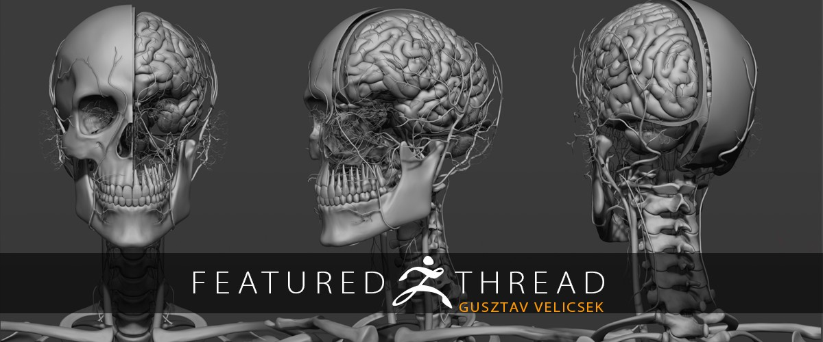 Pixologic Zbrush Blog 3d4medical Creates Acclaimed 3d Anatomy App
