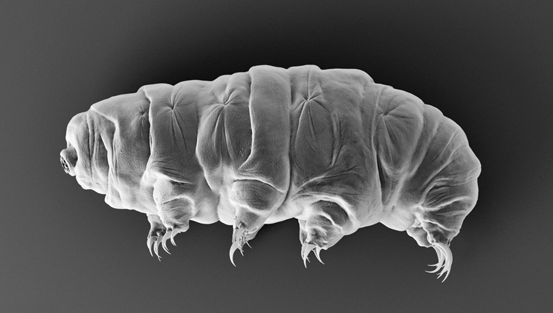 Tardigrade Lead In