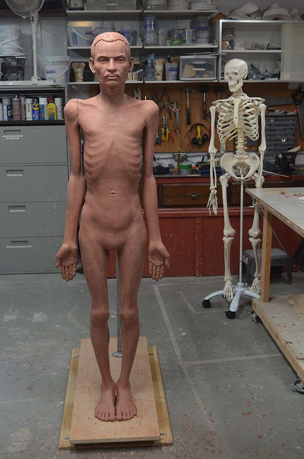 Anatomical forms are established