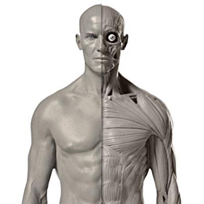 Mastering Human Anatomy in ZBrush