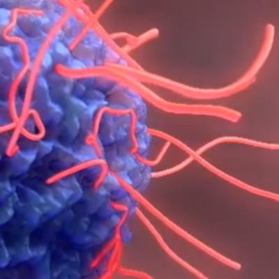 Ebola virus 3D animation