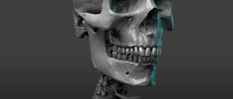Pixologic: ZBrush Blog » Free Skeleton Anatomy Reference Model