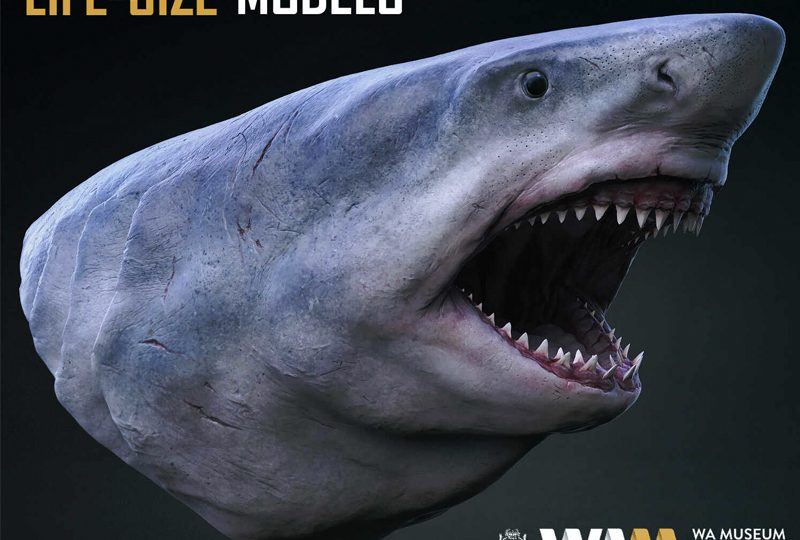 LIFE-SIZE Dinosaurs, Megalodon and other creatures for WA Museum Boola Bardip